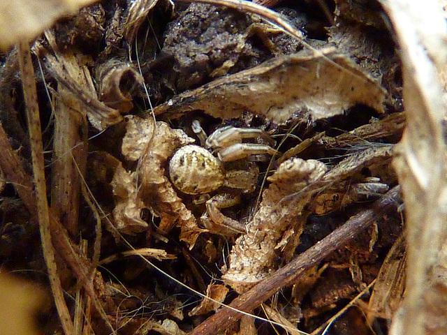 Cherchez l'araignée !