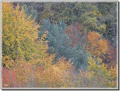 Impressions d'automne ...