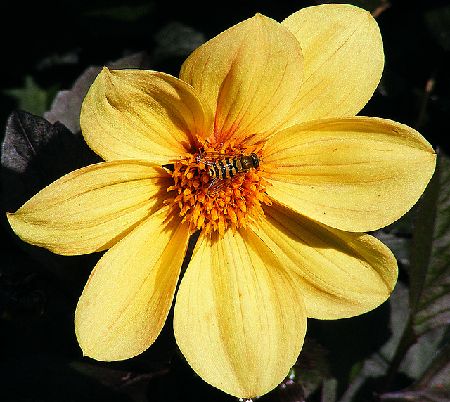 On a yellow flower