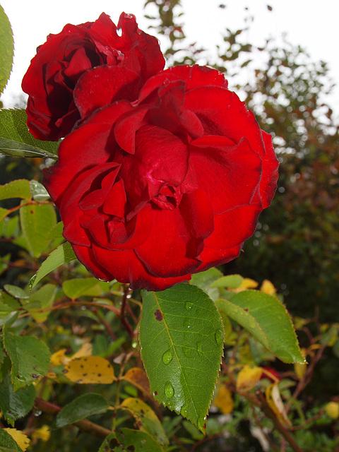 Royal Show im Herbst