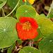 20101021 8605Aw [D~LIP] Blütenpflanze ?????