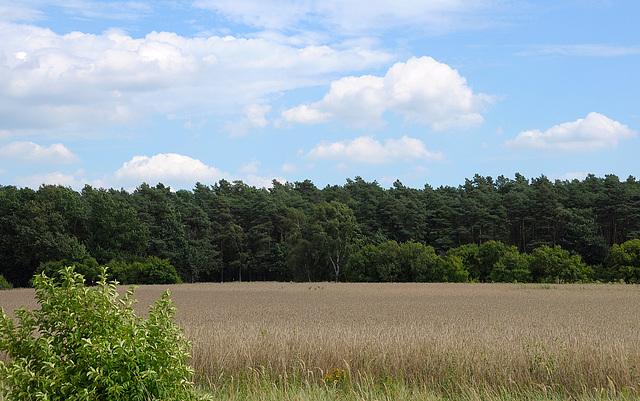 Landschaft bei Jüterbog