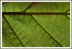 Blattlandschaft