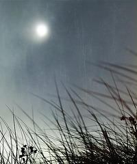 sun of the night