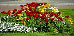Springtime colours