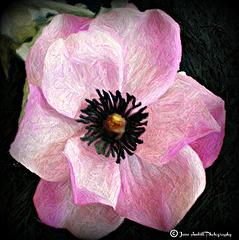 Silk flower in crayon