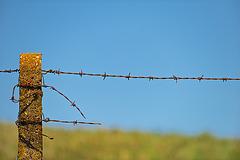 Happy Fence Friday!
