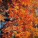 Herbst 2007