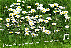 Daisy, daisy give me your answer do....