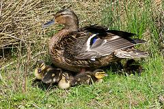 Mum and the kids (Cute warning)!!