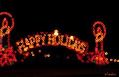 Happy Holiday Lights..