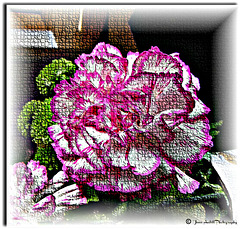 The mosaic carnation