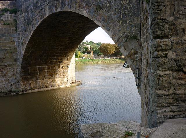 canard sur l'Aude , sous le Pont Vieux
