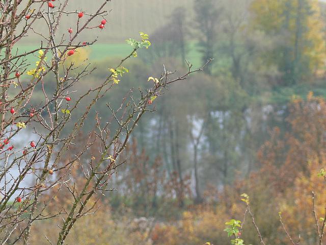 Herbst am Münchshofener Berg