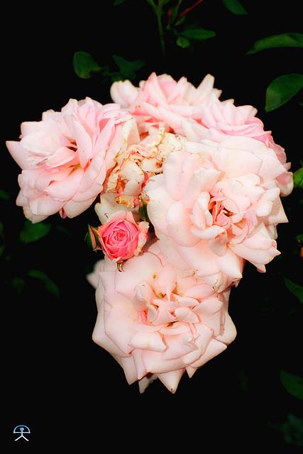 Blumen-im-Garten