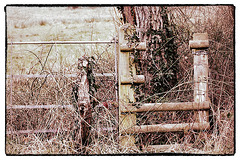 HFF - Neglected fence