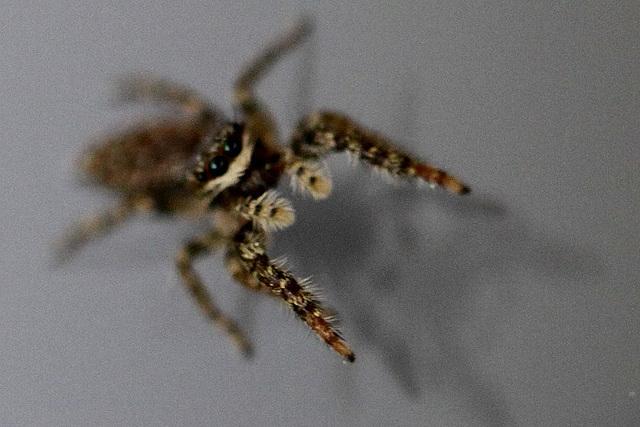 20100524 4435Maw Spinne