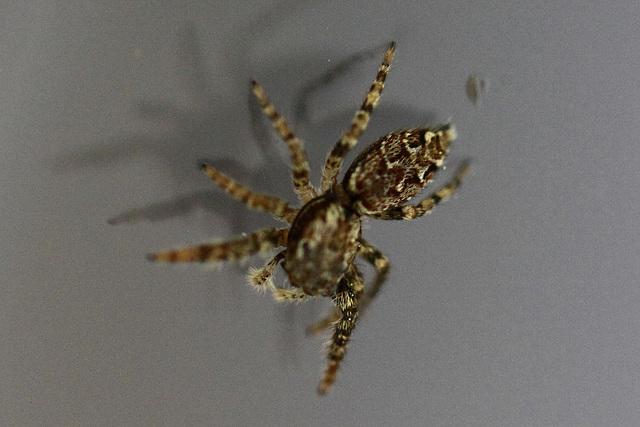 20100524 4437Maw Spinne