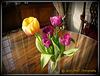 Tulips in Rushton Hall