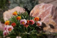 Je voudrais être une fleur dans ton jardin...
