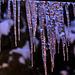 20100108 1330Aw [D~LIP] Eiszapfen, Bad Salzuflen