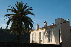 typical old house with palm tree!