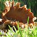 Fungusaurus Rex .. 'shroom ..
