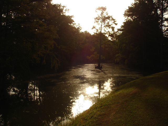 Bayou / Indianola, Mississippi. USA - 9 Juillet 2010