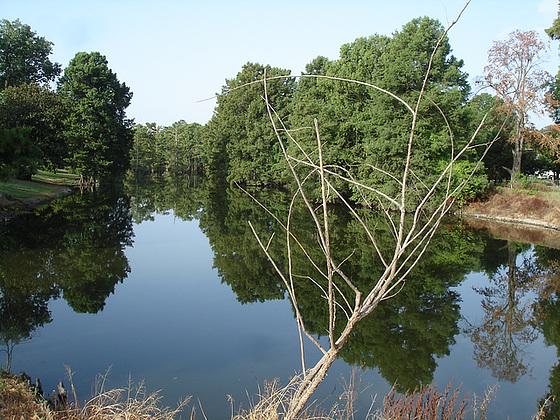 Bayou / Indianola, Mississippi. USA - 9 Juillet 2010- Photo originale