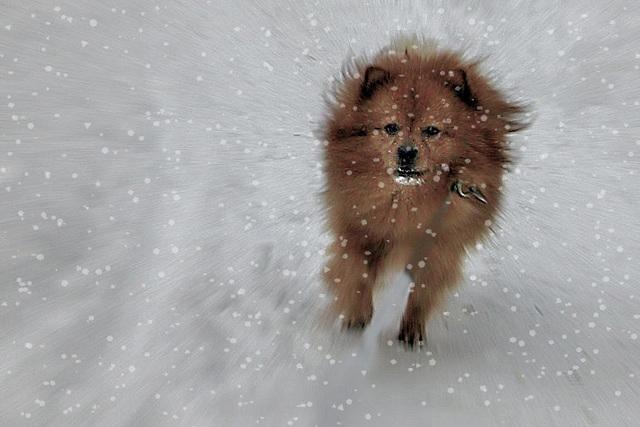 NINO--Winterfreuden