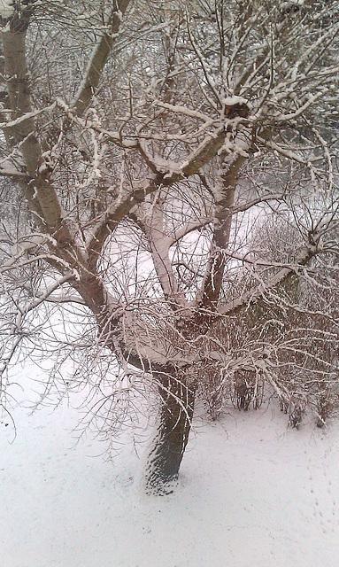 Winter in Compiègne