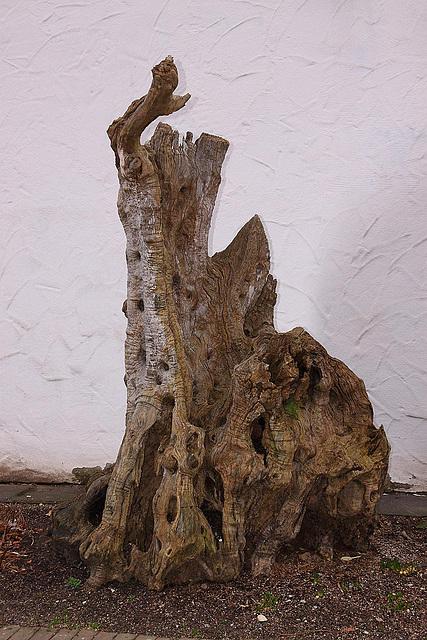 20110206 9679RAw Baum-Holz, Gruga-Park