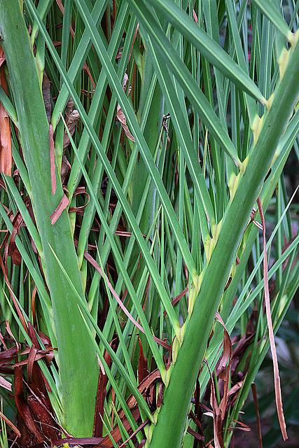 20110206 9666RAw Gitter-Pflanze, Gruga-Park