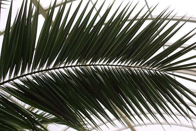 20110206 9673RAw Palmwedel, Gruga-Park