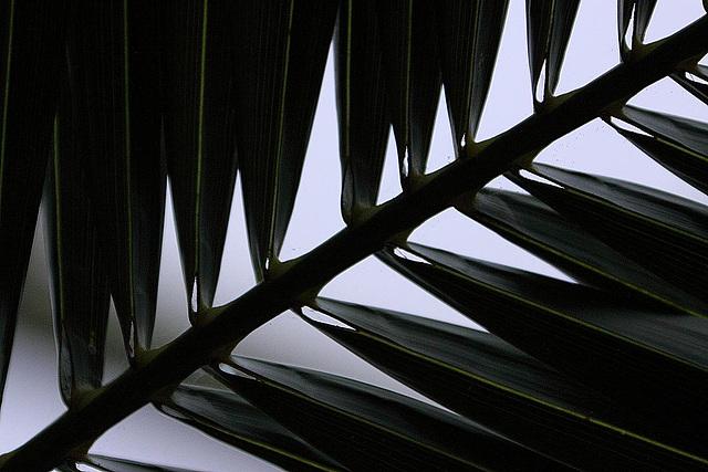 20110206 9678RAw Naturform, Gruga-Park