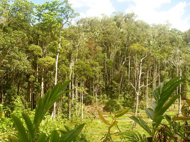 Wald, den es zu retten gilt Ambodivoanio