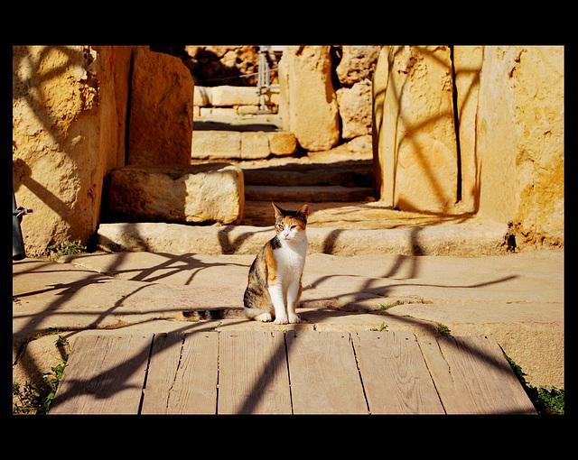Gardien du Temple (Ġgantija temples)