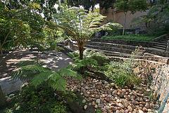 Balboa Park Zoro Garden (8070)