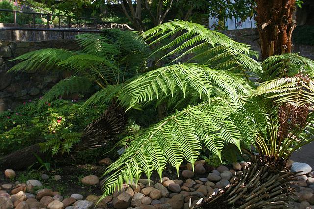Balboa Park Zoro Garden (8072)