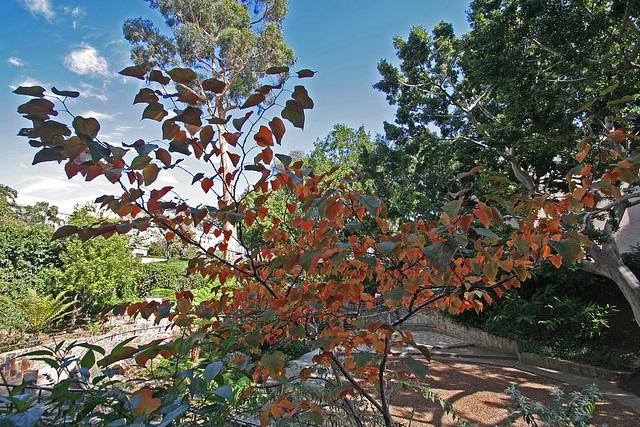 Balboa Park Zoro Garden - Autumn Color (8076)
