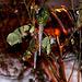 20100109 1350Aw [D~LIP] Eiszapfen, Bad Salzuflen