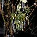 20100109 1344Aw [D~LIP] Eiszapfen, Bad Salzuflen
