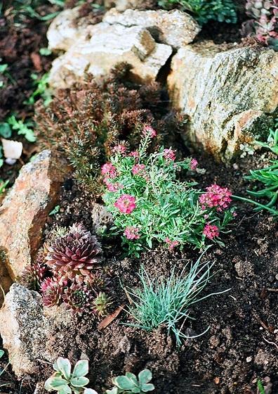 les petites Poaceae et Cyperaceae 9761281.b78a6e30.560
