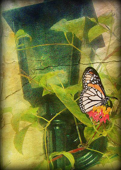 la lampe à papillons