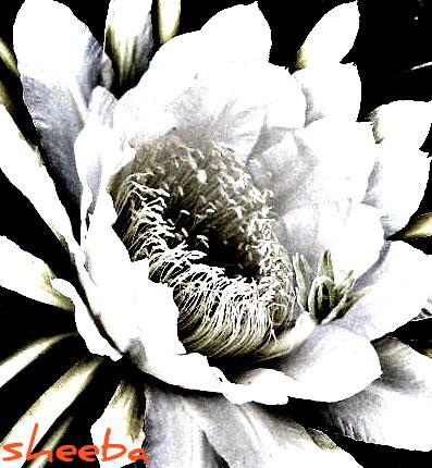 In black & white...