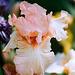 Iris Haute couture