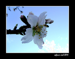 printemps 2011