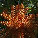 Balboa Park Botanical Pavilion (8088)