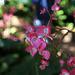 Balboa Park Botanical Pavilion (8089)
