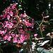 Balboa Park Botanical Pavilion (8092)
